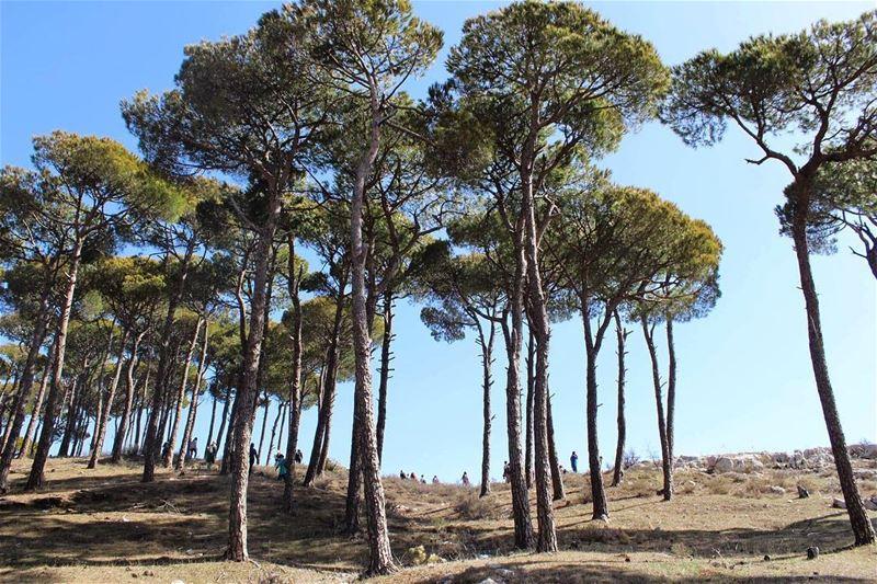 lebanonnature southlebanon lebanontimes livelovelife natureaddict ... (`Aramtá, Al Janub, Lebanon)