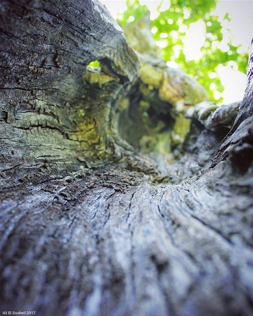 inside the tree  tb  inside  tree  texture  macro  nature  wood ...