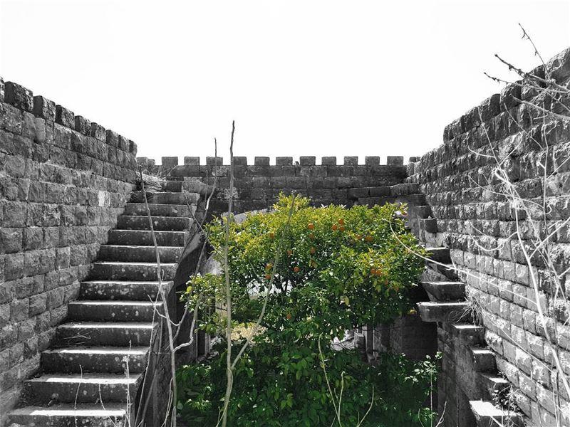 ~ Abandoned 🏚 & 🍊🌳 ~... abandoned abandonedplaces ... (Rechmaya)