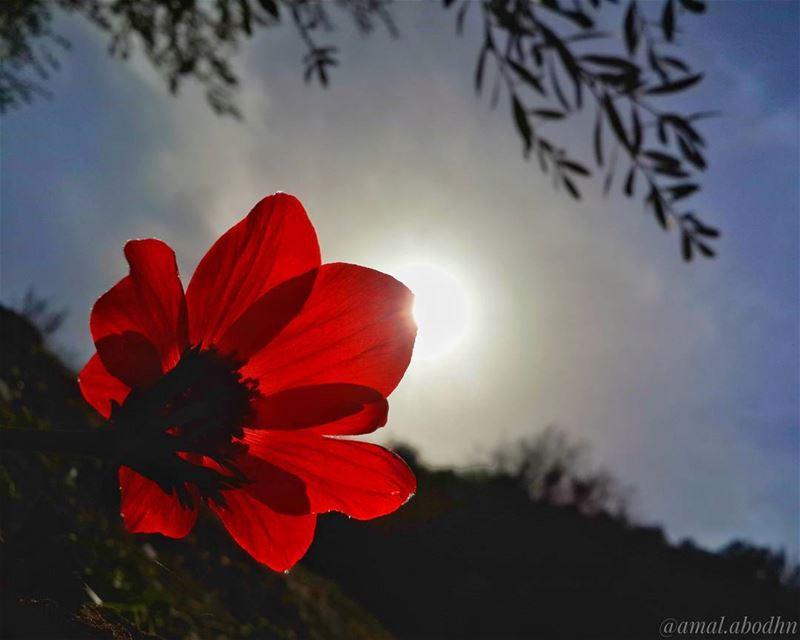 اقترب ممن يفتحون في روحك نوافذ من نور،، ويخبرونك انه في وسعك ان تضيء العالم