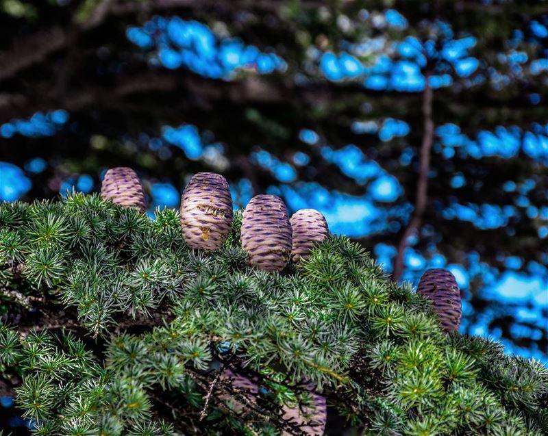 lebanon hadatheljebbeh cedarforest livelovebcharre bcharre ... (Hadeth El Joubbe, Liban-Nord, Lebanon)