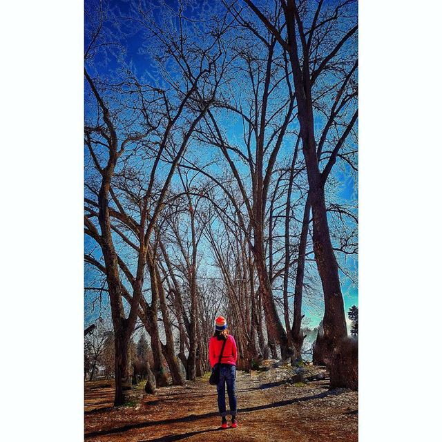 Some beautiful place to get lost in 🌳 trees taanayel livelovelebanon ... (Taanayel- Bekaa)