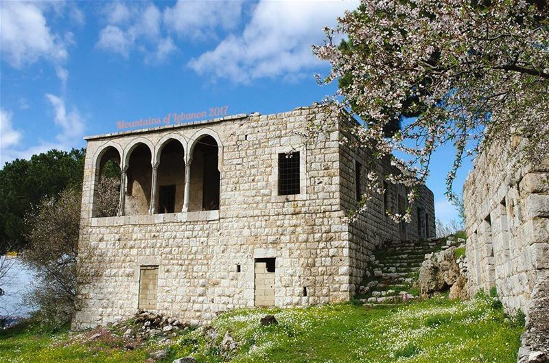 Blossomed almond trees in front of an old gallery stone house in Ballouneh, (Ballouneh, Mont-Liban, Lebanon)