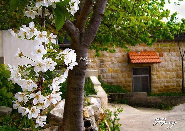 """كتبها ربيعي بزهور الحنان"" لبنان livelovelebanon lebanon ... (Chemlane, Mont-Liban, Lebanon)"