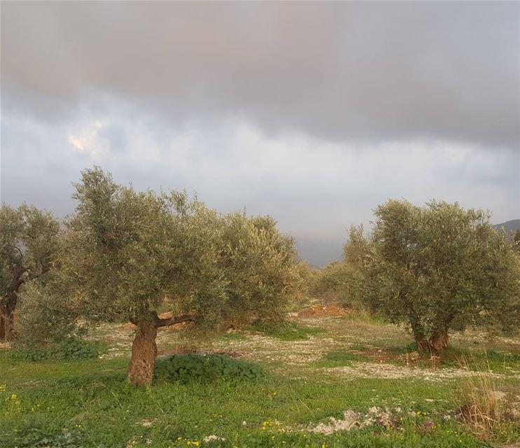 ها قد نشر الربيع ثوبا طواه ليل الشتاء فاكتست به أشجار الخوخ والتفاحفظهرت (El Khâldîyé, Liban-Nord, Lebanon)
