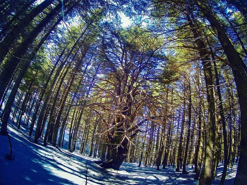 Some of the lebanesenature beauty captured today 🌲 trees ... (Shouf Biosphere Reserve)