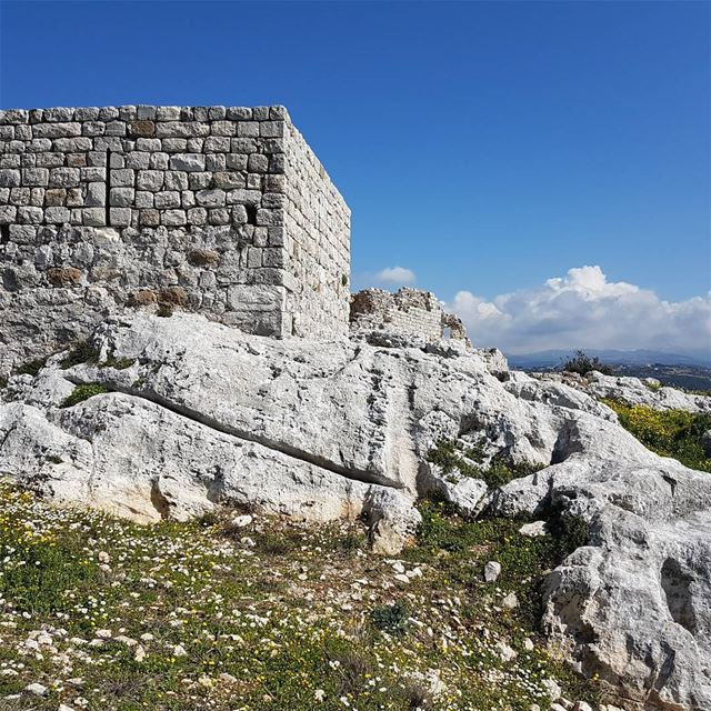 The citadel of Smar Jbeil in the beginning of the spring. Daisies envade... (Smar Jubayl, Liban-Nord, Lebanon)