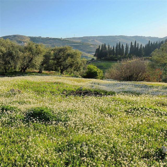 Rebirth 🌳🌸🌞 spring trees field flowers sunrise morning life ... (Bqosta, Liban-Sud, Lebanon)