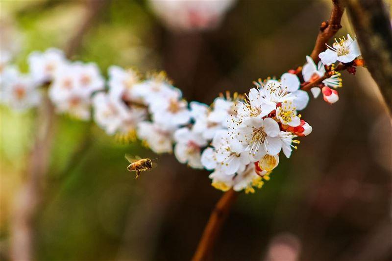 No rest, even on Sundays 🐝 sundays sunday bee flowers nature ...
