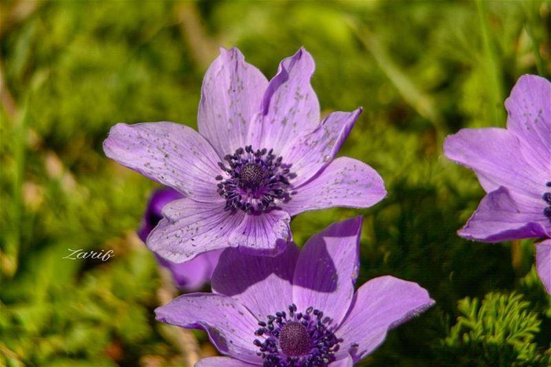 @macro_vision@flowerschannel@nikonbarry@nikon_dslr_users@nikonworld_@n (Bahri - Saida)