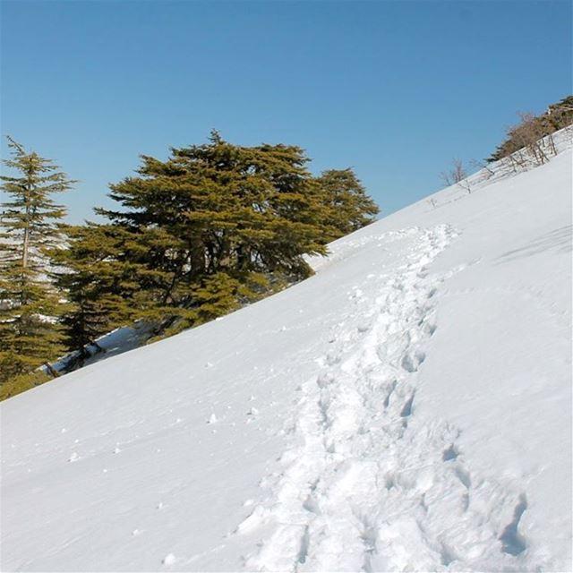 Life gives you the journey...you create the path lebanon lebanonshots ... (Al Shouf Cedar Nature Reserve)