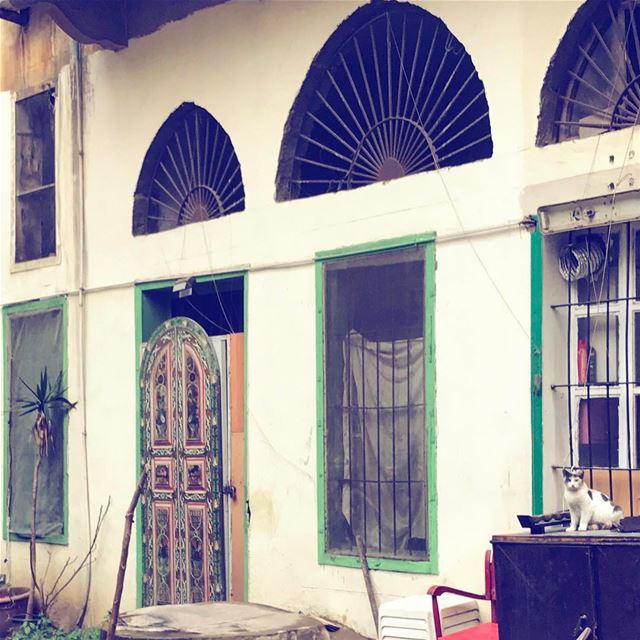 Posing over chaos😺 Lebanon tb travel travelgram traveler wanderlust... (Beirut, Lebanon)