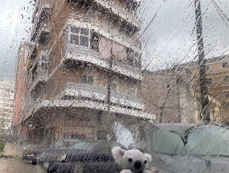 My Koala loves the rain 💦💦💦 Koala Cute Doll in my Car Tripoli ... (ابي سمراء)