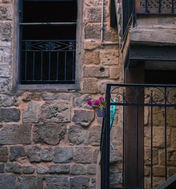 Come let us take our fill of love until the morning just like this flower � (Saïda, Al Janub, Lebanon)