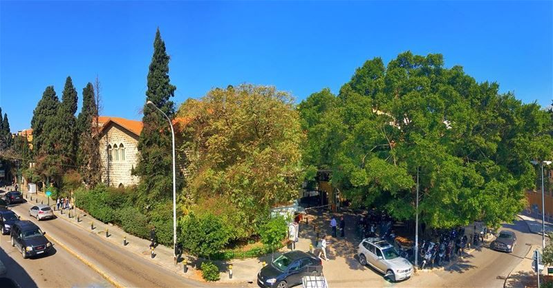 green is the prime color of the world 🌳🌲 aub livelovelebanon ... (American University of Beirut (AUB))