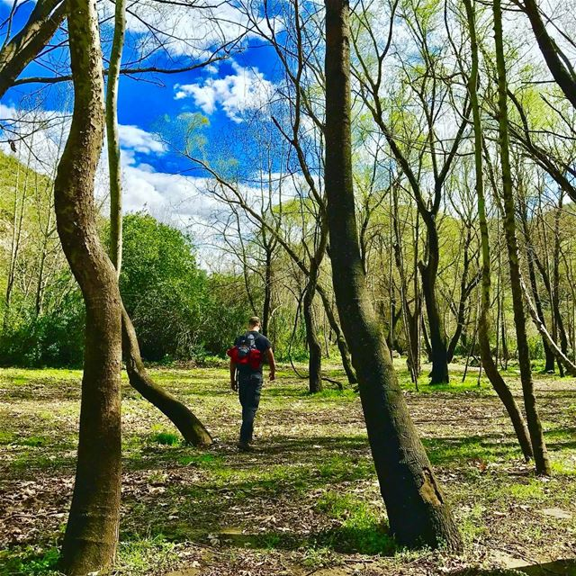"""Trees are poems that the earth write upon the sky"". Gibran Khalil Gibran.... (`Akkar, Liban-Nord, Lebanon)"