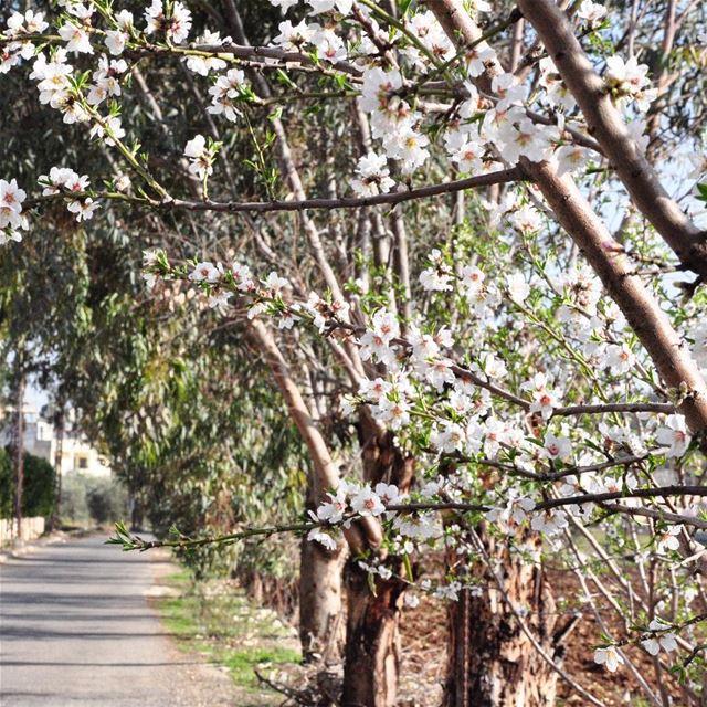 A walk through such place !--------------------------- hangoutlebanon ... (برج قلاوية)