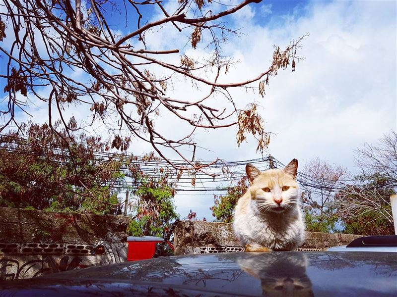 """If cats could talk, they wouldn't."" love cats streetcat nature ... (Mar mikheal)"
