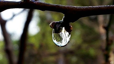 nature rain raindrop lebanon winter capture camera photography ...
