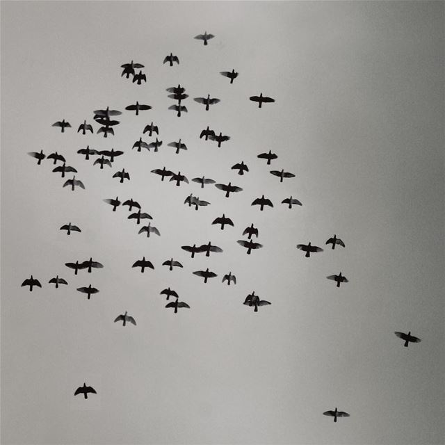 Carpe diem. It's time to move on 🔝 bird birds ... (Tyre, Lebanon)