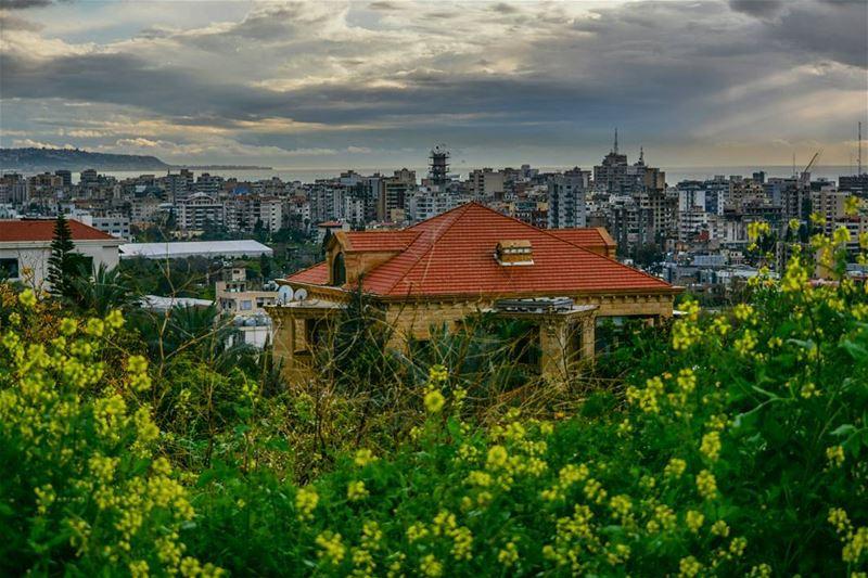 lebanon nikon📷 photography photography photographer lebanon ... (Bramiyeh)
