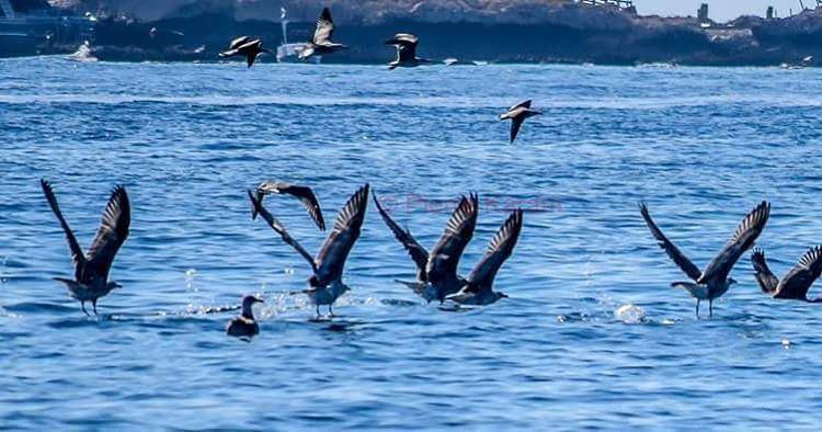 Have a nice week blue water mediterranean sea birds flying ...
