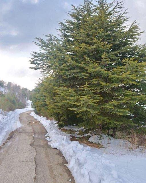 wintertime roadtrip snowangel roadtonowhere lebanonshots ... (Hardîne, Liban-Nord, Lebanon)